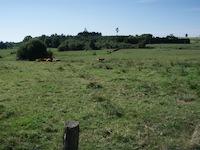Le Pays des Belles Vaches