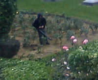 Dans le jardin d'à côté...