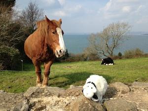 Vacances de Petit Mouton en Bretagne