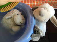 blog-bain-petit-mouton