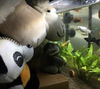 Copaiiiiins poissons